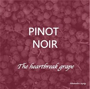 Pinot Noir wine grape knowledge