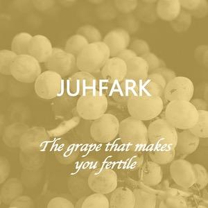 Juhfark is a rare grape from Hungary